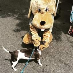 dog and Pluto