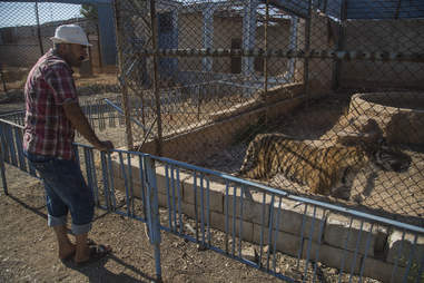 Rescuers arrive for Aleppo zoo animals