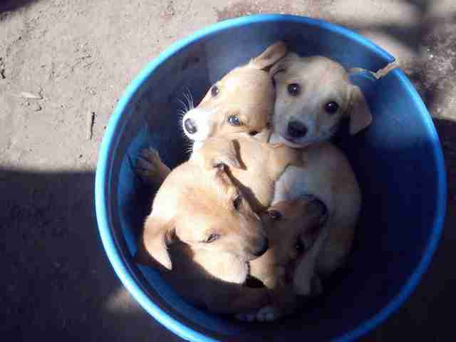 Rescued puppies in bucket