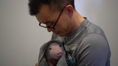 Man holding rescued piglet