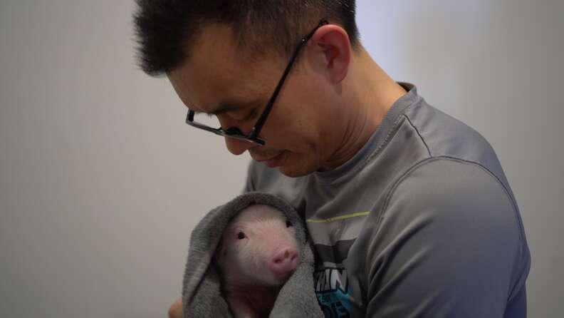 Man holding rescued piglet