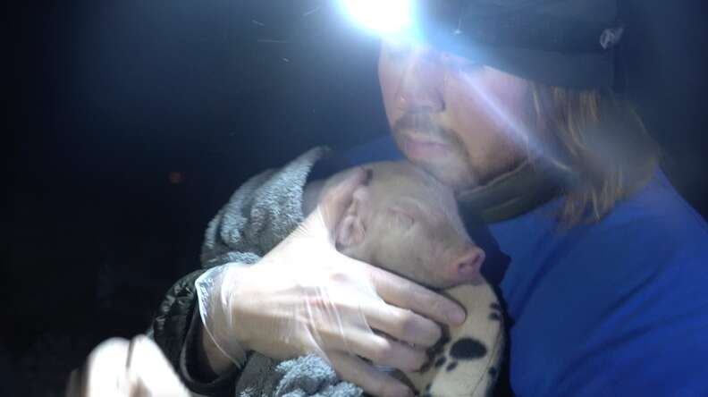 Man carrying rescued piglet