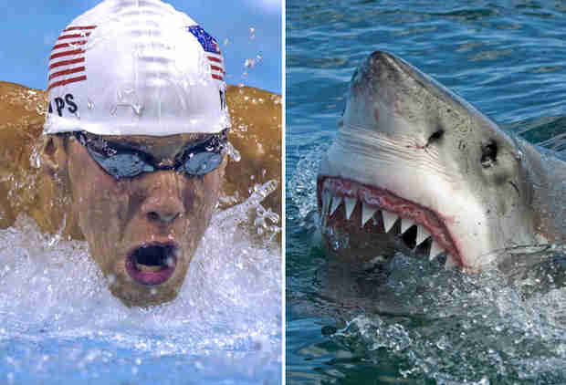 Here's How People Reacted to Michael Phelps' Historic Shark Race