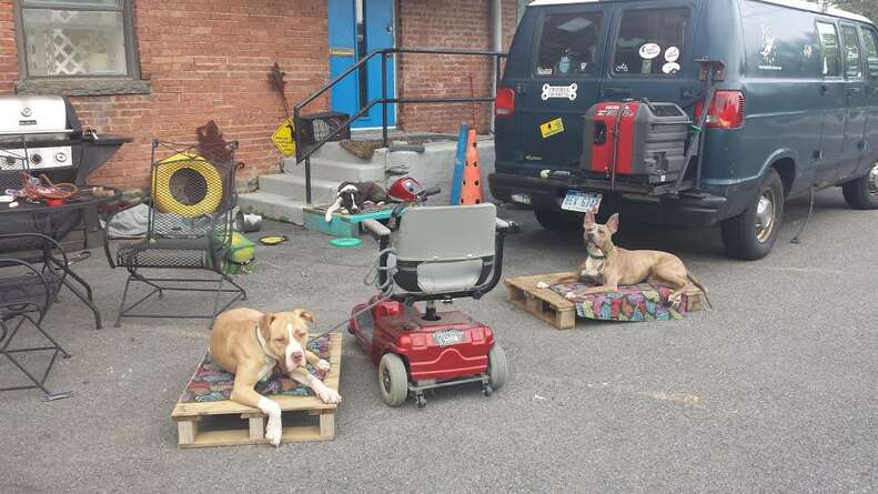 service pit bulls