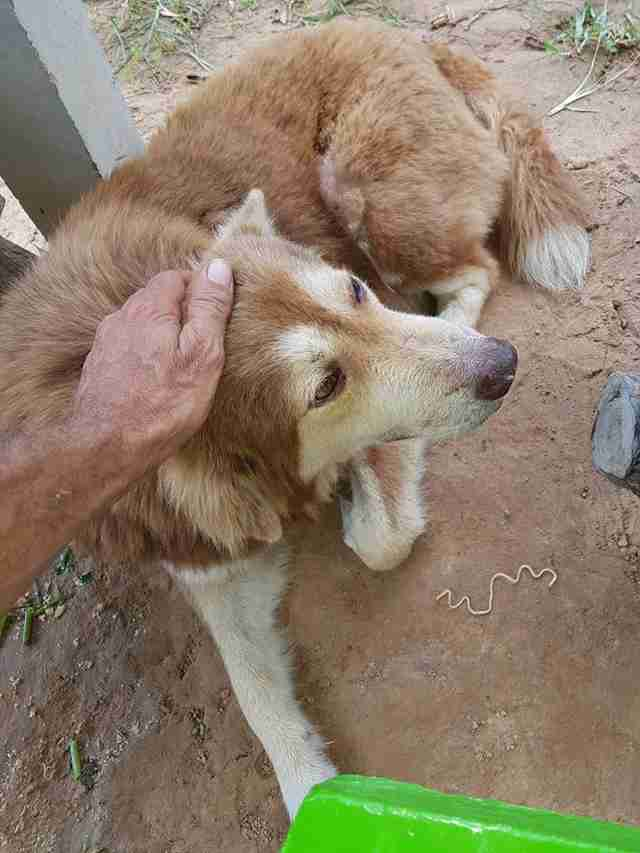 Man touching abandoned dog