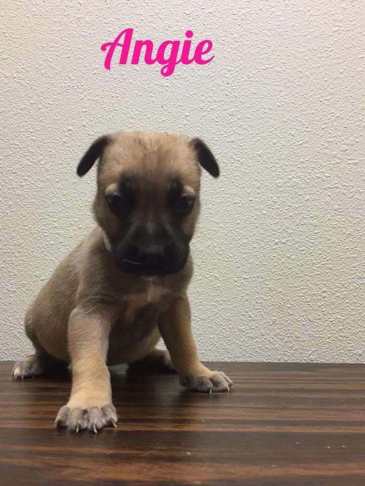 Saved puppy