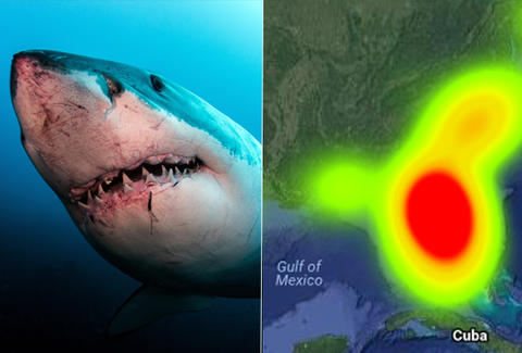 odds of being attacked by a shark