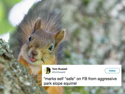 squirrel attack brooklyn