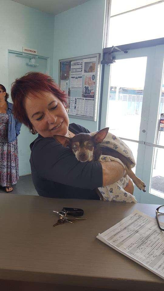 Woman holding senior shelter dog
