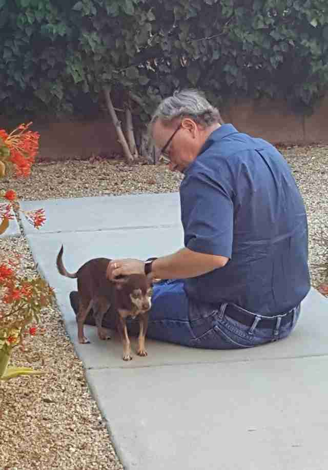 Senior chihuahua outside with man
