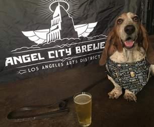rescue basset hound wears bandanas
