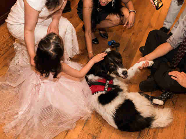 Dog at wedding reception