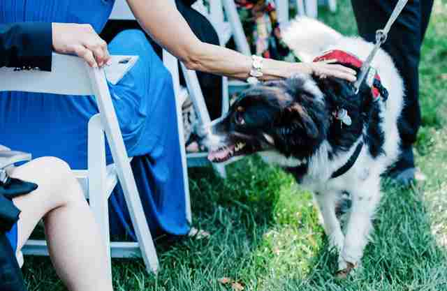 Dog in wedding ceremony