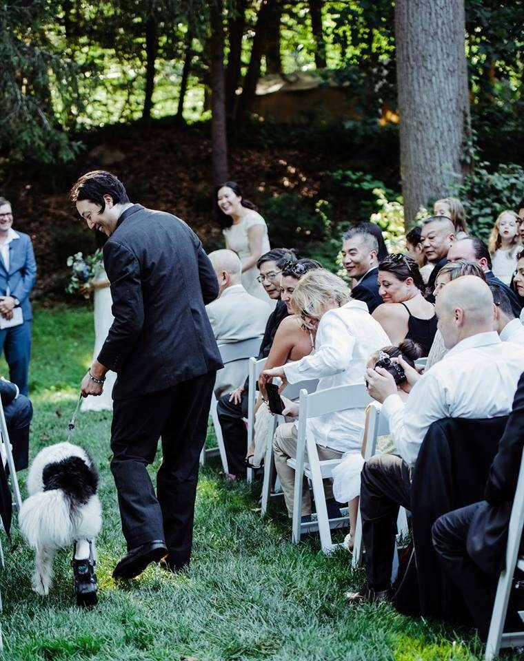 Rescue dog walking down wedding aisle
