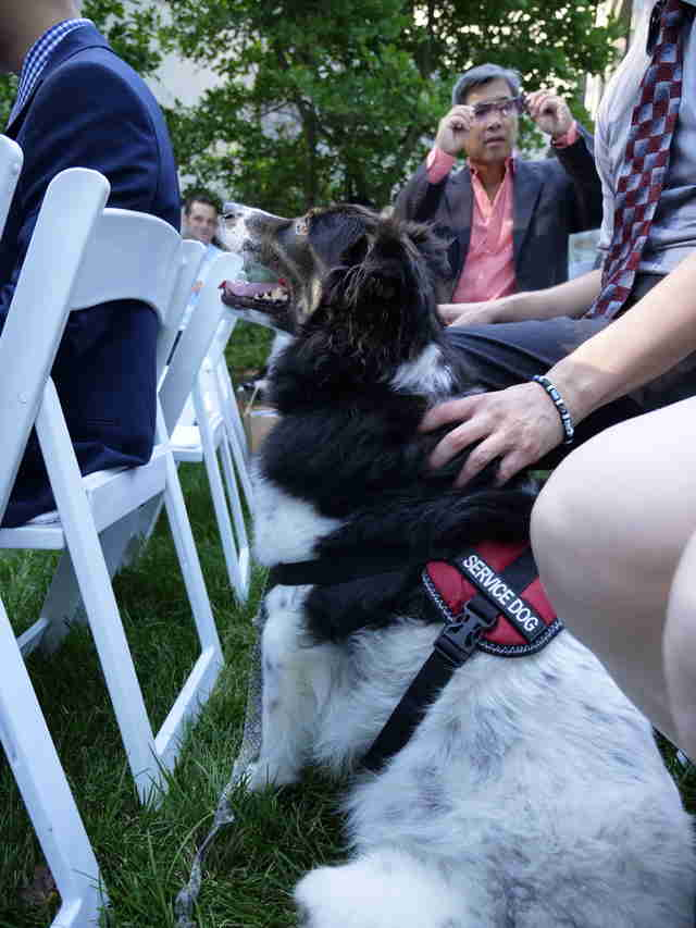 Rescue dog at wedding