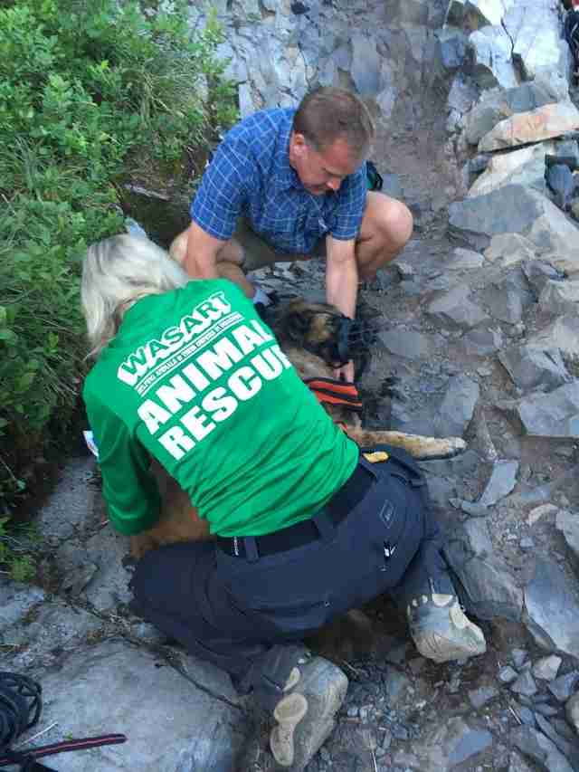 german shepherd rescued from mountain