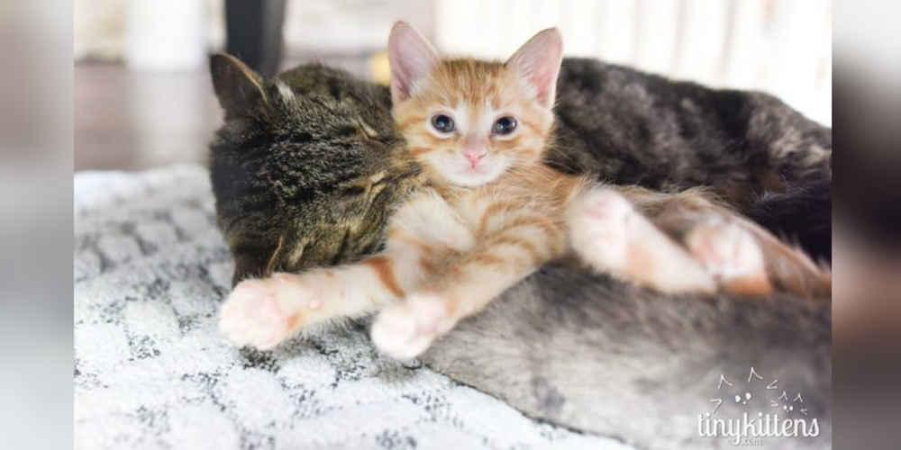 aggressive neutered male cat behavior