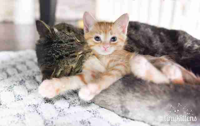 how to introduce a new kitten to a cat according to experts the dodo