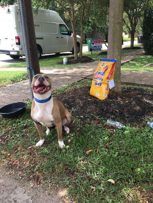 Abandoned dog tied to stop sign