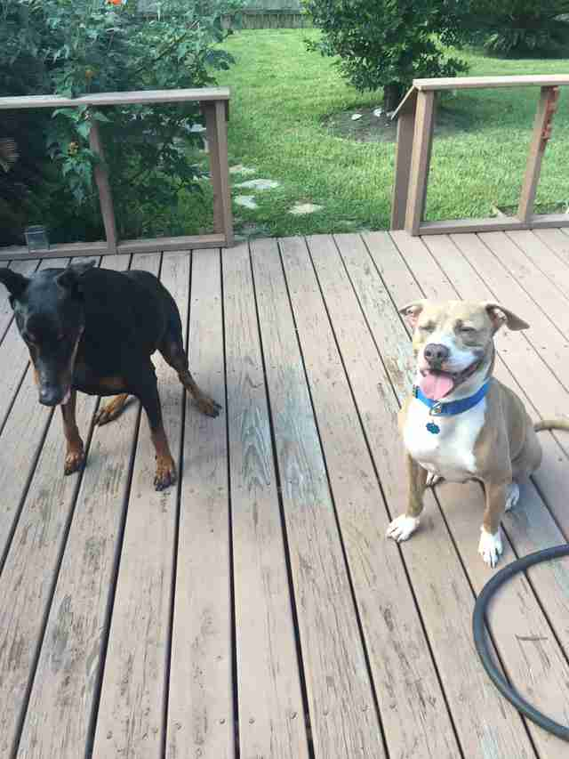 Two rescue dogs on deck