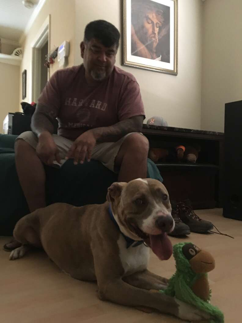 Rescue dog in new home