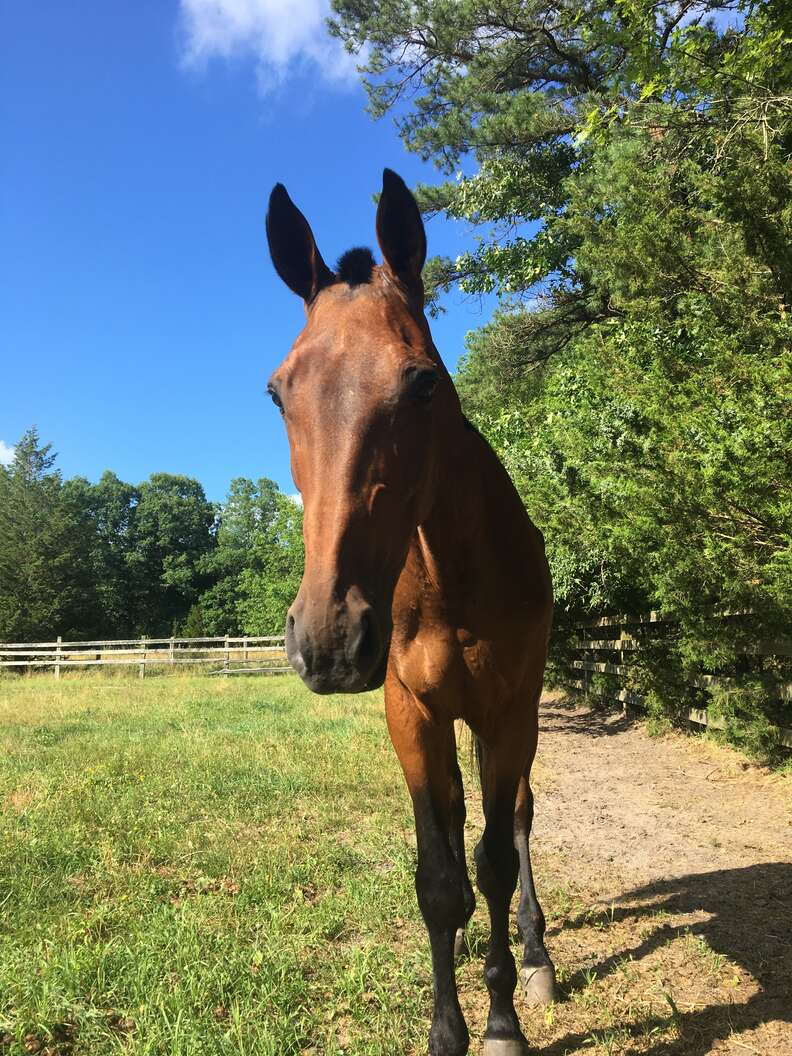 Rescue horse at sanctuary