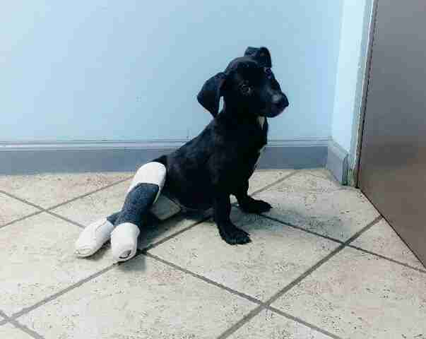 Rescued puppy with casts