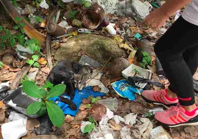 Street puppies in trash pile