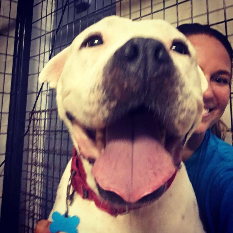 adopted pit bull
