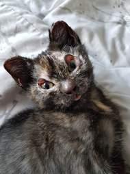 kitten burned in fire