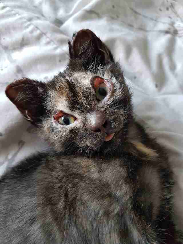 kitten burned in fire