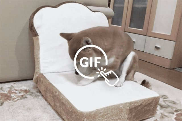dog on bread dogbed