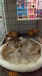 Mom cat and kittens in cage
