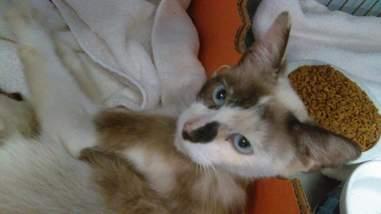 Mom cat in labor