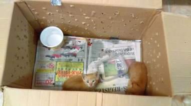 Kittens in cardboard box