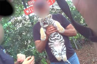 Tiger cub used for selfies in Florida