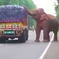 Asian elephant steals snack from truck in India
