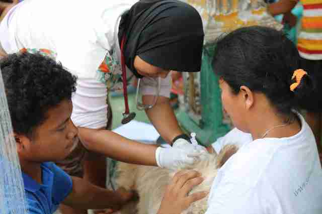 Vets treating dog in Indonesia