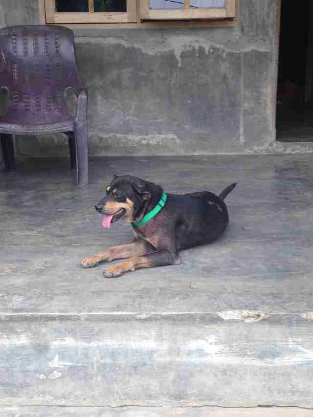 Dog on porch in Indonesia
