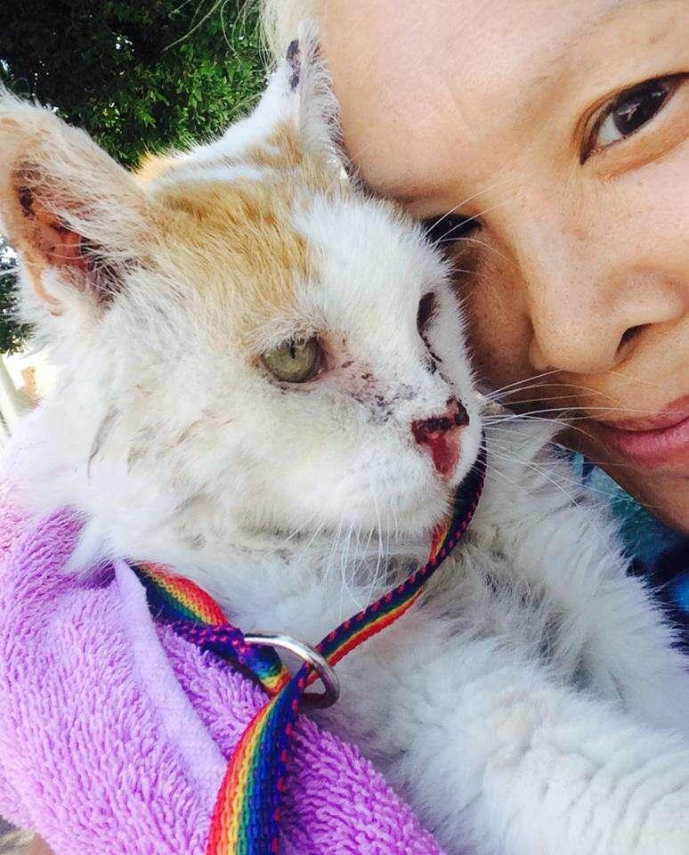 Woman cuddling rescue cat