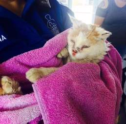 Woman carrying rescue cat in towel