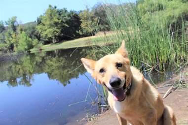 Rescue dog smiling at lake