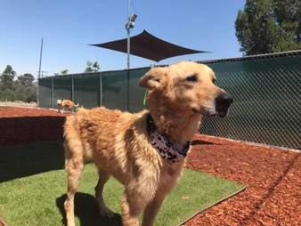 Rescue dog outside