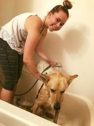 Rescue dog getting bath