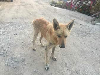 Skinny street dog