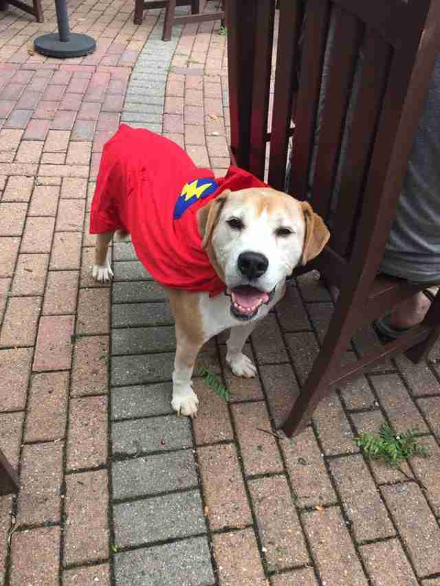 dog wearing cape