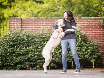rescue mastiff