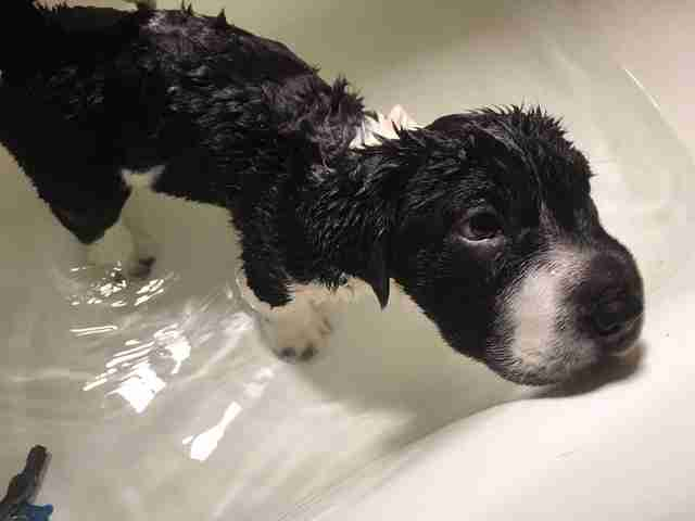 Puppy in bath
