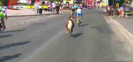 Pony runs bike race in Poland