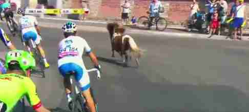 Pony joins bike race in Poland